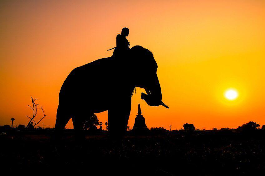 Better leaders = Better Riders of Elephants