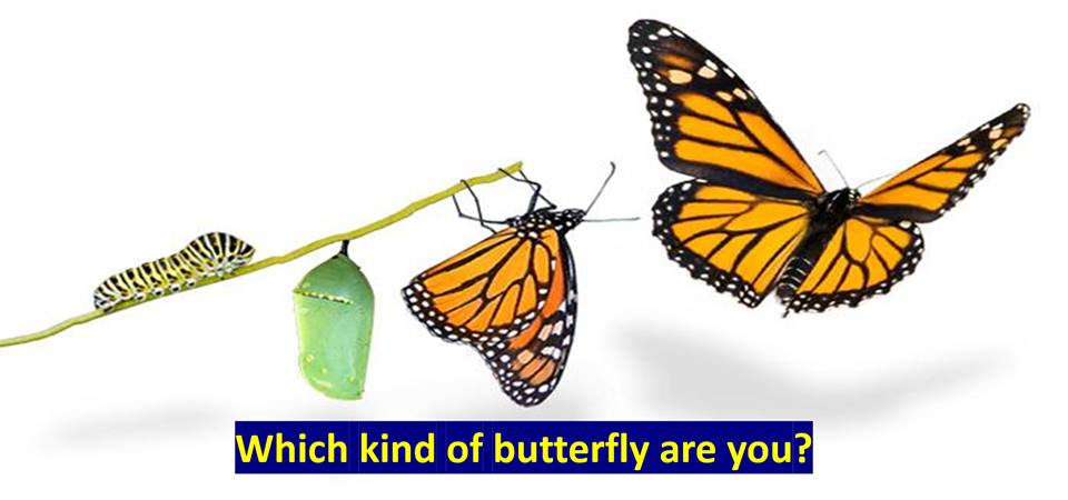 What kind of Butterfly are you?